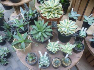 テーブルに置かれた複数の観葉植物